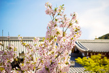Sakura  Spring Cherry Blossom at Kiyomizu Temple in Kyoto  Japan