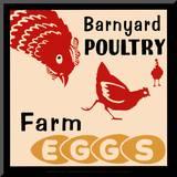 Barnyard Poultry-Farm Eggs