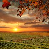 Chianti Vineyard Landscape in Tuscany  Italy