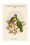 Ptilopus Solomonensis - Solomon Island Fruit-Pigeon - Dove