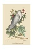 Little White Heron