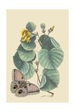 Maho Tree and Moth