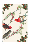 Christmas Birds and Holly