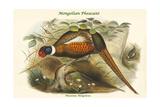 Phasianus Mongolicus - Mongolian Pheasant