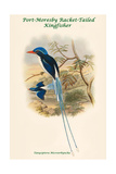 Tanysiptera Microorhyncha - Port-Moresby Racket-Tailed Kingfisher