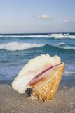 Mexico  Quintana Roo  Yucatan  Cancun  Shell on Beach