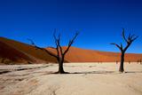 Dead Camel Thorn TreesDead Vlei Namibia