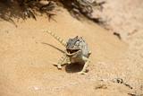 Eating_Chameleon