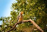 Hornbill Wild Bird
