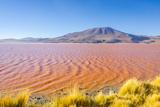Laguna Colorada  Reserva Nacional De Fauna Andina Eduardo Avaroa  Los Lipez  Bolivia