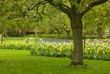 Spring Lawn in Garden