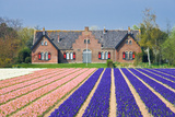 House with View on Hyacinthfields