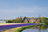 House with Reflection and Hyacinthfields