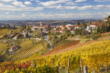 Vineyards  Treiso  Langhe  Piedmont  Italy