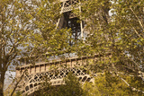 The Eiffel Tower  Seen through Trees