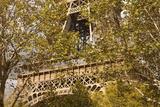 The Eiffel Tower  Seen through Trees