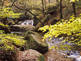 Forest Brook in Autumn