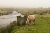 Foggy Day on Dartmoor