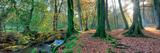 Sunlit Woodland  Birks O'aberfeldy  Perthshire