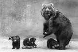 Kodiak Bear Family