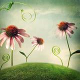 Echinacea Flowers in Fantasy Landscape