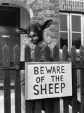 Sheep Guard Papier Photo par Cole