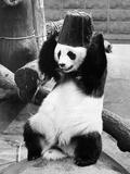 Panda Head Bucket