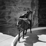 Seal Riding Horse
