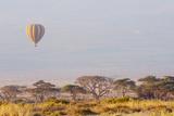 Hot Air Balloon Floating above Acacia Trees with Mount Kilimanjaro Backdrop Amboseli National Park