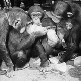 Paper Cup Chimps