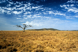 Ancient Dead Tree on the Serengeti Plain