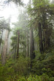 Scenic Image of Redwood National Park  Ca