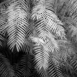 Fern Variations in Infrared