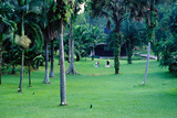A Section of Lawn in the 54 Hectare Singapore Botanic Gardens  Singapore  South-East Asia