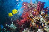 Coral Reef with Butterflyfish Papier Photo par Georgette Douwma