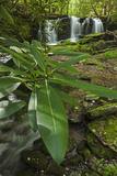 Waterfalls  Rhododendron Creek