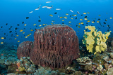 Reefscape with Sponges and Schooling Fish