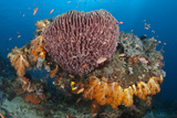 Coral Head with Sponge and Soft Coral