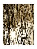 Reeds 8167