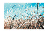 Grass and Reeds 4482