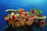 Reef Scenic of Hard Corals   Soft Corals and Tropical Fish   Malaysia