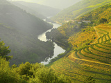 Portugal  Douro  Terraced Vineyards