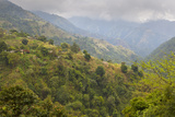 Blue Mountain Landscape  Jamaica
