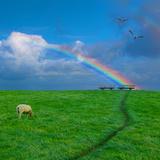 Grazing Sheep beneath Rainbow
