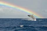 Humpback Whale Rainbow Breach Papier Photo par Share Your Experiences
