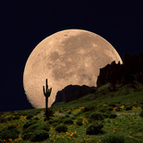 Coyote Moon Southwestern Cactus Mountain