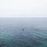 Ocean Skyline  Seascape  Malibu  California