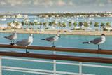 Sea Gulls on Railing of Cruise Ship