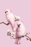 Cockatoos and Magnolia