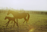 Horse and Foal Running in Pasture  Side View